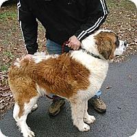Adopt A Pet :: King - Dandridge, TN