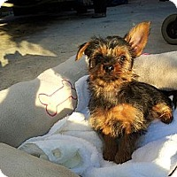 Adopt A Pet :: Woofy - Fort Lauderdale, FL