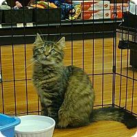 Adopt A Pet :: Sheena - Hamilton, ON