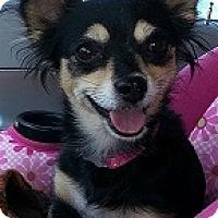 Adopt A Pet :: Maya - Mesa, AZ
