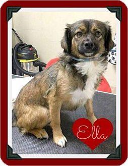 Tibetan Spaniel/Spaniel (Unknown Type) Mix Dog for adoption in Arlington, Texas - Ella