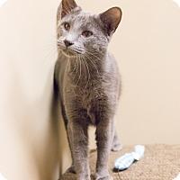 Adopt A Pet :: Minouche - Chicago, IL