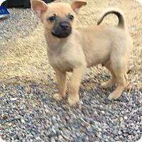 Adopt A Pet :: Jesse - Gilbert, AZ