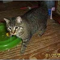 Adopt A Pet :: FATIMA - Chapman Mills, Ottawa, ON