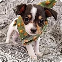Adopt A Pet :: Petrie - Apple Valley, CA