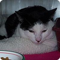 Adopt A Pet :: Buddy - El Cajon, CA