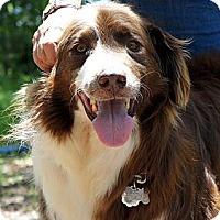 Adopt A Pet :: Buckmeister - Savannah, GA