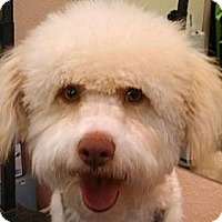 Adopt A Pet :: Charlie - HAPPY SWEET BOY! - Seattle, WA