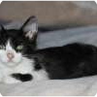 Adopt A Pet :: K-Quail2-Howard - Colorado Springs, CO
