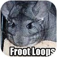 Adopt A Pet :: Froot Loops - Virginia Beach, VA