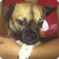Adopt A Pet :: Rex - Kingwood, TX