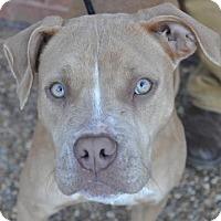 Adopt A Pet :: Tali - Atlanta, GA