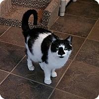 Adopt A Pet :: Alexa Rose - River Edge, NJ