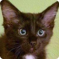 Adopt A Pet :: Darryl - Irvine, CA