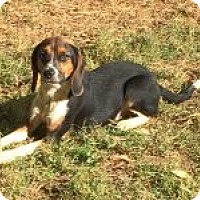 Adopt A Pet :: Sasha - Dumfries, VA
