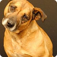 Adopt A Pet :: Fender - Newland, NC