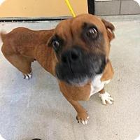 Adopt A Pet :: Canela - Denver, CO