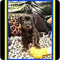 Adopt A Pet :: WEBSTER - Milton, GA