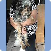 Adopt A Pet :: Bobby - San Juan Capistrano, CA