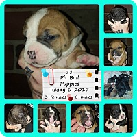 Adopt A Pet :: Anna & Sosa's puppies - Des Moines, IA