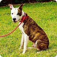 Adopt A Pet :: Obi Wan - Austin, TX