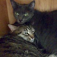 Adopt A Pet :: Mattie - San Francisco, CA