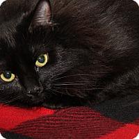 Adopt A Pet :: Zoey (Spayed) - Marietta, OH