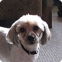 Adopt A Pet :: Lilly - Rock Springs, WY
