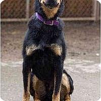 Adopt A Pet :: Simon - Portland, OR