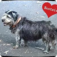 Adopt A Pet :: Bootsie - Franklinton, NC