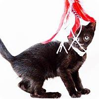 Adopt A Pet :: Aquarius - N. Billerica, MA