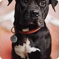 Adopt A Pet :: Eddie Spaghetti - Portland, OR