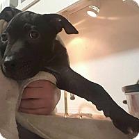 Adopt A Pet :: Cindy - Savannah, GA