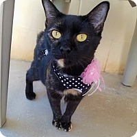 Adopt A Pet :: Plymouth - Umatilla, FL