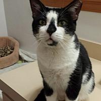 Adopt A Pet :: Stanley - Delmont, PA