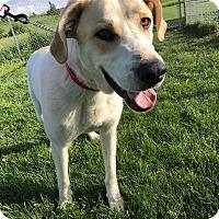 Adopt A Pet :: Silas - Maryville, MO