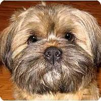 Adopt A Pet :: Charlie - Mays Landing, NJ