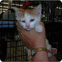Adopt A Pet :: Sugar - Riverside, RI