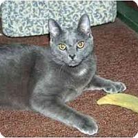 Adopt A Pet :: Monday - Racine, WI