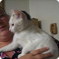 Adopt A Pet :: Trixie - Walnut, IA