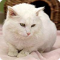 Adopt A Pet :: Raymond Reddington - Chicago, IL