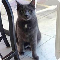 Adopt A Pet :: Graycie - Colmar, PA