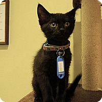 Adopt A Pet :: Peter - The Colony, TX