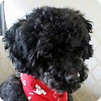 Adopt A Pet :: Flynn - La Costa, CA