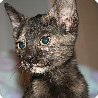 Adopt A Pet :: Duchess - Tampa, FL