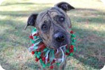 Bulldog/Bulldog Mix Dog for adoption in Jesup, Georgia - Daisy