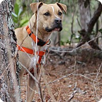 Adopt A Pet :: Sweetie Adoption Pending - Pinehurst, NC