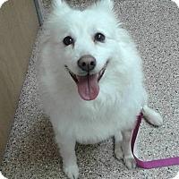 Adopt A Pet :: Bella of Cincinnati, Ohio - Lindsey, OH