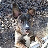 Adopt A Pet :: Rudolph - Brattleboro, VT