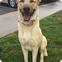 Adopt A Pet :: Howie - Rancho Palos Verdes, CA